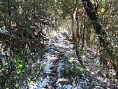 雪蓋復興尖、冰封塔曼山:IMG_2451.jpg