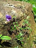 獅公髻尾山:IMG_8066.jpg