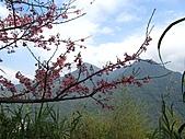 西羅岸賞櫻:IMG_2619.jpg
