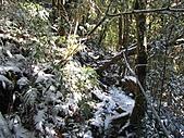 雪蓋復興尖、冰封塔曼山:IMG_2480.jpg