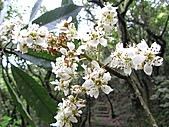 植物隨拍:IMG_3405.jpg