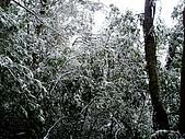 北插雪景:P3050062