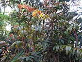 植物隨拍:IMG_4458.jpg