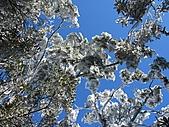雪蓋復興尖、冰封塔曼山:IMG_2525.jpg
