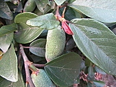 植物隨拍:IMG_4171.jpg