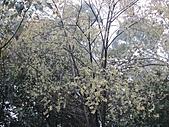 北宜路、銀河洞越嶺待老坑山、杏花林、貓纜、茶山古道下政大:IMG_2838.jpg