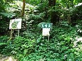 大溪金面山:IMG_7384.jpg