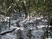 雪蓋復興尖、冰封塔曼山:IMG_2453.jpg