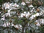 植物隨拍:IMG_3702.jpg