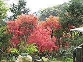 植物隨拍:IMG_3397.jpg