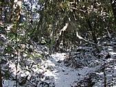 雪蓋復興尖、冰封塔曼山:IMG_2454.jpg