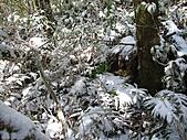 雪蓋復興尖、冰封塔曼山:IMG_2481.jpg