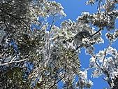 雪蓋復興尖、冰封塔曼山:IMG_2526.jpg
