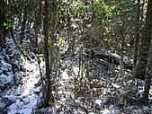 雪蓋復興尖、冰封塔曼山:IMG_2455.jpg