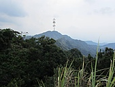 東亞最美麗的百合:IMG_0806.jpg