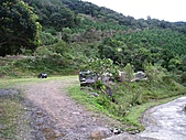 小烏來登赫威山、赫威前峰、木屋遺址、赫威神木群:IMG_5017.jpg