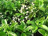 植物隨拍:IMG_4436.jpg
