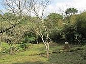 佛山賞李花:IMG_2792.jpg