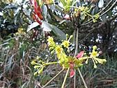 植物隨拍:IMG_3408.jpg