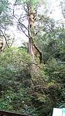 拉拉山遊樂區:IMG_1519.jpg