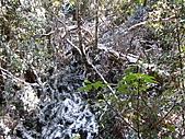 雪蓋復興尖、冰封塔曼山:IMG_2456.jpg