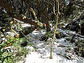 雪蓋復興尖、冰封塔曼山:IMG_2482.jpg