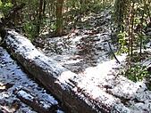 雪蓋復興尖、冰封塔曼山:IMG_2436.jpg
