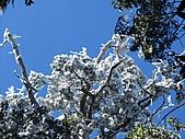 雪蓋復興尖、冰封塔曼山:IMG_2549.jpg