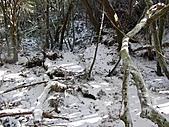 雪蓋復興尖、冰封塔曼山:IMG_2501.jpg