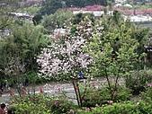 陽明山、竹子湖賞花行:IMG_3028.jpg