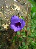 獅公髻尾山:IMG_8068.jpg