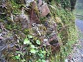 太平山四月植物篇:IMG_2873.jpg
