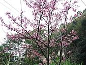 西羅岸賞櫻:IMG_2624.jpg