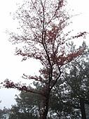 雪見、東洗水山:IMG_3076.jpg