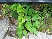 太平山四月植物篇:IMG_2863.jpg