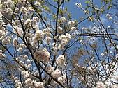 春之花海-武陵賞櫻(2):IMG_2898.jpg