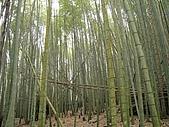 水社大山:IMG_2514.jpg