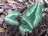 植物隨拍:IMG_3411.jpg