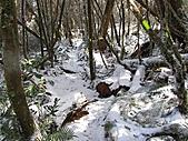 雪蓋復興尖、冰封塔曼山:IMG_2502.jpg