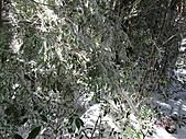 雪蓋復興尖、冰封塔曼山:IMG_2484.jpg