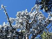 雪蓋復興尖、冰封塔曼山:IMG_2550.jpg