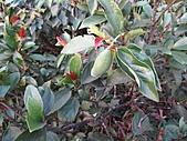 植物隨拍:IMG_4173.jpg