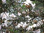 植物隨拍:IMG_3703.jpg