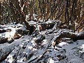 雪蓋復興尖、冰封塔曼山:IMG_2458.jpg