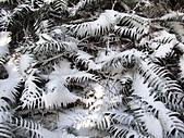 雪蓋復興尖、冰封塔曼山:IMG_2503.jpg