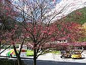 武陵楓正紅:IMG_1458.jpg
