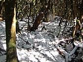 雪蓋復興尖、冰封塔曼山:IMG_2459.jpg