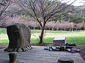 武陵楓正紅:IMG_1561.jpg