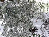 雪蓋復興尖、冰封塔曼山:IMG_2504.jpg