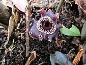 植物隨拍:IMG_3412.jpg